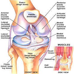 Anterior and Posterior Cruciate Ligament Injury -