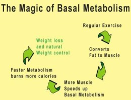 What is basal metabolic rate measured in