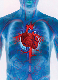 Cardiovascular Fitness -