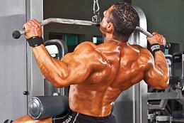 back/biceps/trapezius