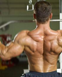 back/deltoids